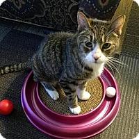 Adopt A Pet :: Lena - Rochester, NY
