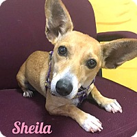 Adopt A Pet :: Sheila - Savannah, GA
