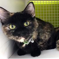 Adopt A Pet :: Charlotte - Kansas City, MO