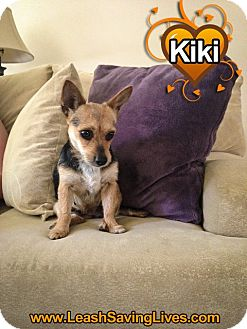 Terrier (Unknown Type, Small) Mix Dog for adoption in Pitt Meadows, British Columbia - Kiki