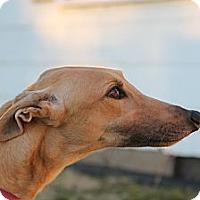 Adopt A Pet :: RFB Breezydream