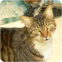 Adopt A Pet :: Brett - Putnam Valley, NY