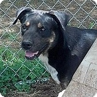 Adopt A Pet :: Quincey - Moulton, AL