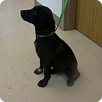 Adopt A Pet :: Mandy - Jacksboro, TN
