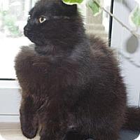 Adopt A Pet :: Malia - Montreal, QC