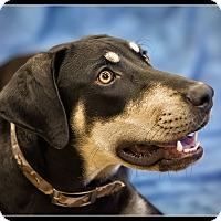 Adopt A Pet :: King - Wickenburg, AZ