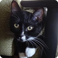Adopt A Pet :: ARGOS - Diamond Bar, CA