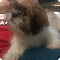 Adopt A Pet :: Sheridan ADOPTED!! - Antioch, IL
