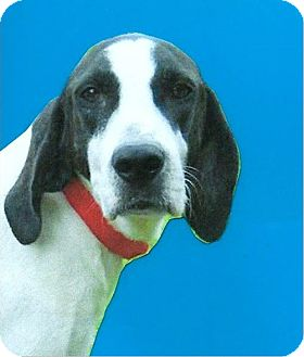 Hound (Unknown Type) Mix Dog for adoption in Sebring, Florida - linus