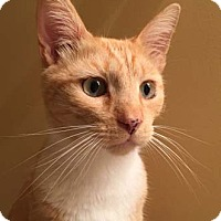 Adopt A Pet :: Sunbeam - Merrifield, VA