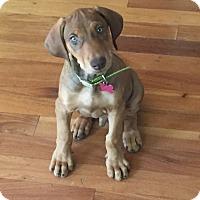 Adopt A Pet :: Dexter - Sacramento, CA