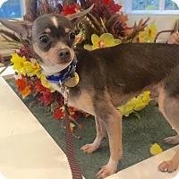Adopt A Pet :: Presley - Oak Ridge, NJ