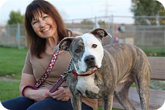 American Pit Bull Terrier Mix Dog for adoption in Elyria, Ohio - Dee Dee