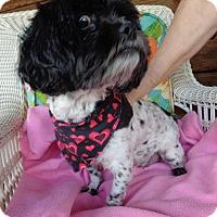 Adopt A Pet :: Bella - Crump, TN