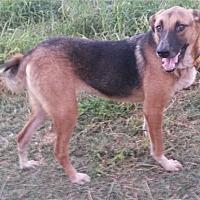 German Shepherd Dog Mix Dog for adoption in East Hartford, Connecticut - Sandra