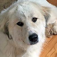 Adopt A Pet :: Hunter in NY - Beacon, NY