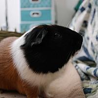 Adopt A Pet :: Kai - Fullerton, CA