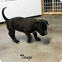 Adopt A Pet :: tangi - Mooresville, IN