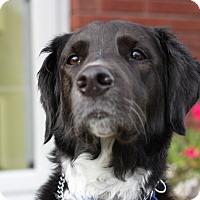 Adopt A Pet :: Carter - Harrison, NY