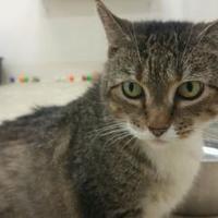 Adopt A Pet :: Lilly - Cincinnati, OH