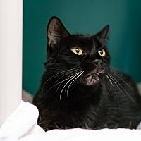 Adopt A Pet :: Sweetie - Houston, TX