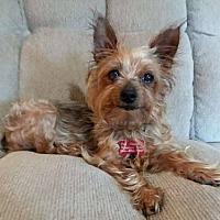 Adopt A Pet :: Prissee - Fairmont, WV