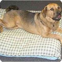 Adopt A Pet :: Bear - Conyers, GA