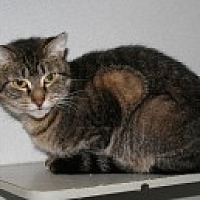 Adopt A Pet :: Raglan - Marietta, GA