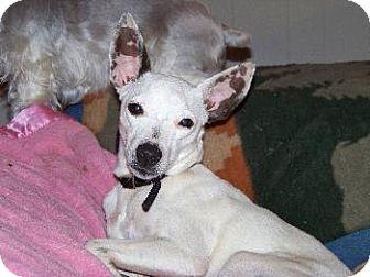 Rat Terrier Mix Dog for adoption in Wetumpka, Alabama - #80983  'Penny'