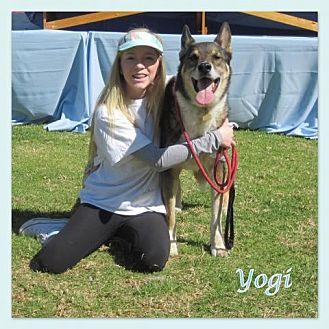 German Shepherd Dog/Collie Mix Dog for adoption in Riverside, California - Yogi