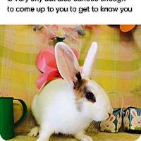 Adopt A Pet :: Leigh - Paramount, CA