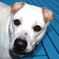 Adopt A Pet :: Eli May - Cincinnati, OH