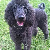 Adopt A Pet :: Mindi - Orlando, FL