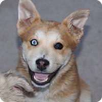 Adopt A Pet :: Soul - Phoenix, AZ