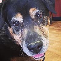Adopt A Pet :: Trinity - Las Vegas, NV
