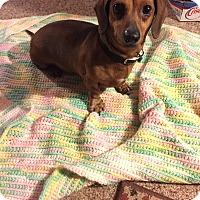 Adopt A Pet :: Dundee - Glastonbury, CT