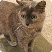 Adopt A Pet :: Katrina (Foster) - Trenton, NJ