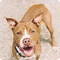 Adopt A Pet :: Tommy - Cleveland, OH