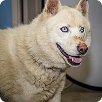 Adopt A Pet :: Gabriel - Martinsville, IN