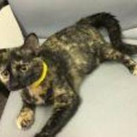 Adopt A Pet :: Zinnia - Livingston, TX