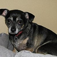 Adopt A Pet :: Peaches - Ruidoso, NM