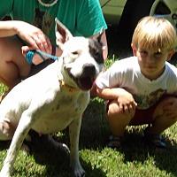 Adopt A Pet :: Spotsy (50 lb) Video - Twinsburg, OH