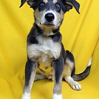 Adopt A Pet :: Louis - Westminster, CO