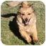 Photo 1 - Sheltie, Shetland Sheepdog/Dachshund Mix Dog for adoption in Sacramento, California - Sydney