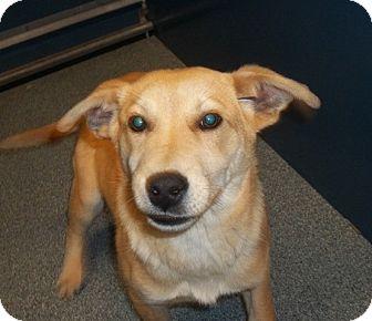 Labrador Retriever Mix Dog for adoption in Warrenton, North Carolina - Caramel
