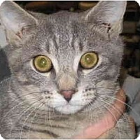Adopt A Pet :: Bruno - Jenkintown, PA