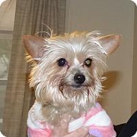 Adopt A Pet :: Shelly - Conroe, TX