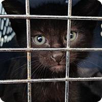 Adopt A Pet :: Rufus - Portland, OR