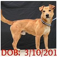 Adopt A Pet :: Canelo - Siler City, NC