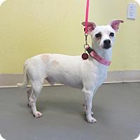 Adopt A Pet :: Casey - Ridgway, CO